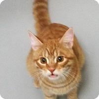 Adopt A Pet :: Skeeter - Burgaw, NC
