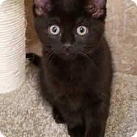 Adopt A Pet :: Adorable Macy - Potomac, MD