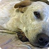 Adopt A Pet :: Eliza LOVES kids - Whitewright, TX