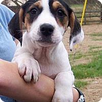 Adopt A Pet :: Dove - Byrdstown, TN