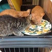 Adopt A Pet :: Washington, et al - Chicago, IL
