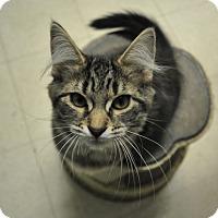 Adopt A Pet :: Magdelina - Rockaway, NJ