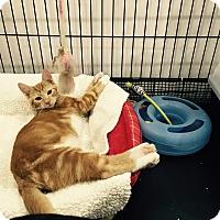 Adopt A Pet :: Eddie - Speonk, NY