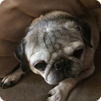 Adopt A Pet :: Lucy - Strasburg, CO