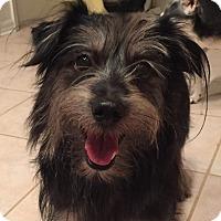 Adopt A Pet :: Peace - Orlando, FL