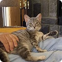 Adopt A Pet :: Brenna - Palmdale, CA