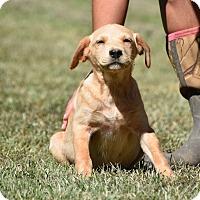 Adopt A Pet :: Tate - Groton, MA