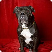 Adopt A Pet :: Tiny - Van Nuys, CA