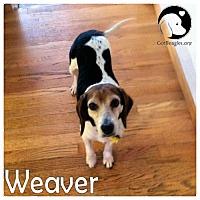 Adopt A Pet :: Weaver - Novi, MI