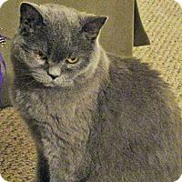 Adopt A Pet :: Ashy - N. Billerica, MA