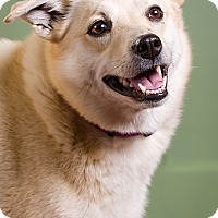Adopt A Pet :: Nilla - Owensboro, KY