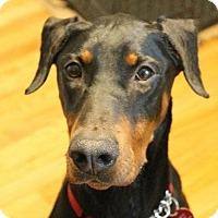 Adopt A Pet :: Fiona - Arlington, VA
