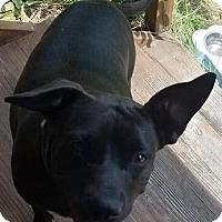 Adopt A Pet :: Lola - North East, FL