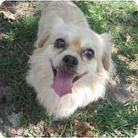 Adopt A Pet :: Fuji - Chesapeake, VA