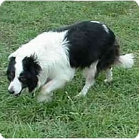 Adopt A Pet :: Dillion - Tiffin, OH