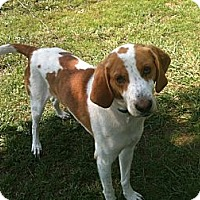 Adopt A Pet :: Charlie - Linton, IN