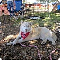 Adopt A Pet :: Navi - Jacksonville, NC