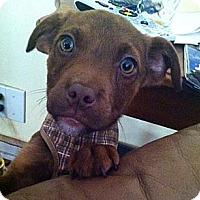 Adopt A Pet :: Finn - Leetonia, OH
