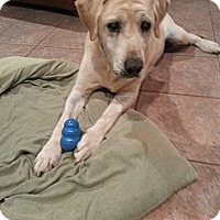Adopt A Pet :: Sarge - Russellville, KY