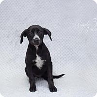 Adopt A Pet :: Roy - Valley Falls, KS