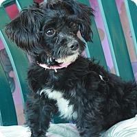 Adopt A Pet :: Oreo - Canoga Park, CA