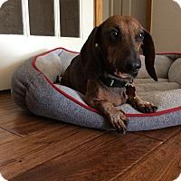 Adopt A Pet :: Douglas - Louisville, CO