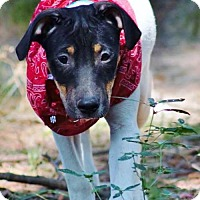 Adopt A Pet :: Sally 1 IN ct - Manchester, CT