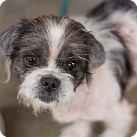 Adopt A Pet :: Ralphie - Minneapolis, MN