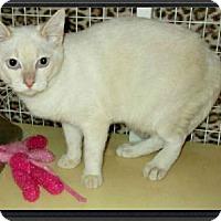 Adopt A Pet :: Yani - Gilbert, AZ