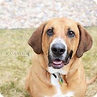 Adopt A Pet :: Kitty - Salt Lake City, UT
