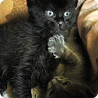 Adopt A Pet :: Gracie - Fort Leavenworth, KS