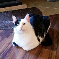 Adopt A Pet :: Colt - Caro, MI