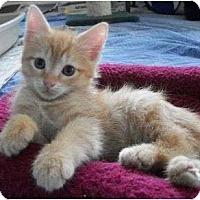 Adopt A Pet :: Lac - Reston, VA