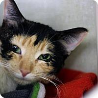 Adopt A Pet :: Bobelle - Chicago, IL