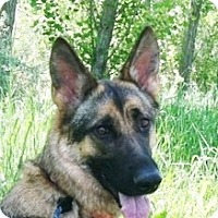 Adopt A Pet :: Kena - Denver, CO