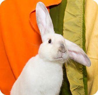 Florida White Mix for adoption in Lowell, Massachusetts - Kurt Cobun