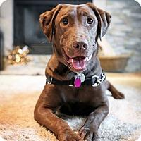 Adopt A Pet :: Blaze - Rigaud, QC