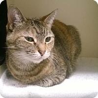 Adopt A Pet :: BUTTERS - Terre Haute, IN