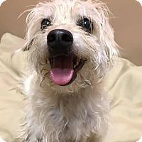 Adopt A Pet :: PJ - Maryville, MO
