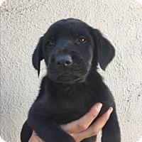 Adopt A Pet :: Dasie - LAKEWOOD, CA