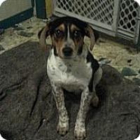 Adopt A Pet :: Judas - Hazard, KY