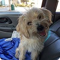 Adopt A Pet :: Donovan - Santa Monica, CA
