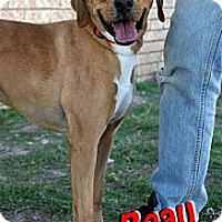 Adopt A Pet :: Beau - Midland, TX