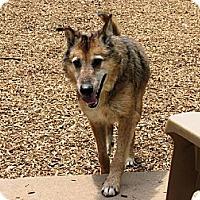 Adopt A Pet :: Shepley - Elizabethtown, PA