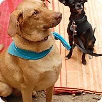 Adopt A Pet :: Sputnik - Marietta, GA