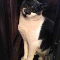 Adopt A Pet :: Ernest - Brooklyn, NY