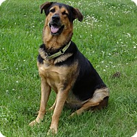 Rottweiler Mix Dog for adoption in Jupiter, Florida - Betty