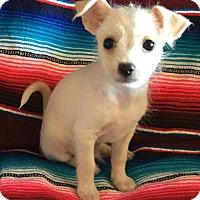 Adopt A Pet :: Jeffrey - Gilbert, AZ