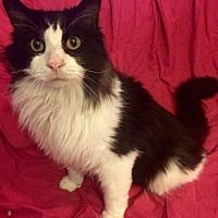 Adopt A Pet :: Rocky - Rochester, MI