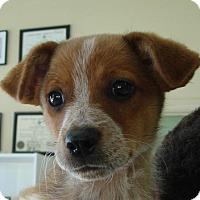 Adopt A Pet :: Ryder - Erwin, TN
